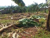 Millions Lost in Ngoma District As Two Gov't Agencies Undermine Anti-Poverty Program
