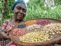 Price of Beans Now Up By 71%