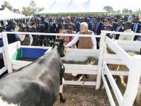 Indian PM Offered 200 Cows to Bugesera Village, Only 47 Were Delivered