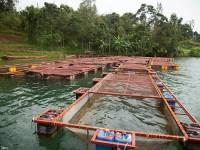 Rwanda Bans Imports of Tilapia Fish Over New Virus Outbreak