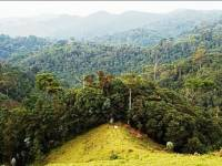 Police Nets 13 People for Encroaching National Park in Western Rwanda