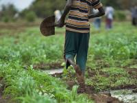How the Green Revolution Is Harming Africa