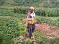 Public Condemnation Helps Save Elderly Woman Fined Rwf 50,000 for 'Stealing' Maize
