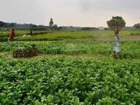 New Global Rules for a Fairer Food Future