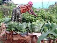 Cash for Destitutes: Rwanda's Lifeline for the Poorest