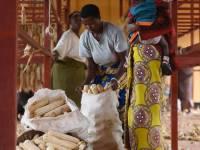 Clinton Foundation Moves To Tackle Rwanda's Aflatoxins Problem